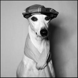 Dog Disco Is The New Human Disco