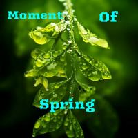 Moment Of Spring