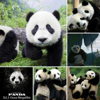 Panda MegaMix