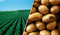 WEATHER & SPUDS