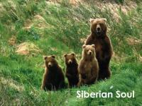 Siberian Soul vol 30